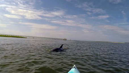 Charleston-Kayak-Rentals-3